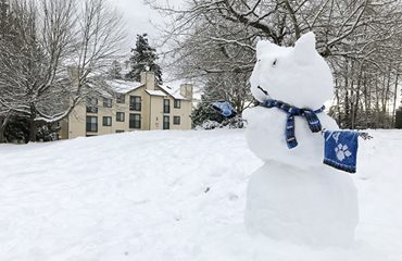 a snow version of a cat in front of husky village