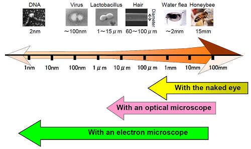 Chart showing vision spectrum including what a person can see with the naked eye, optical microscope, and scanning electron microscope.