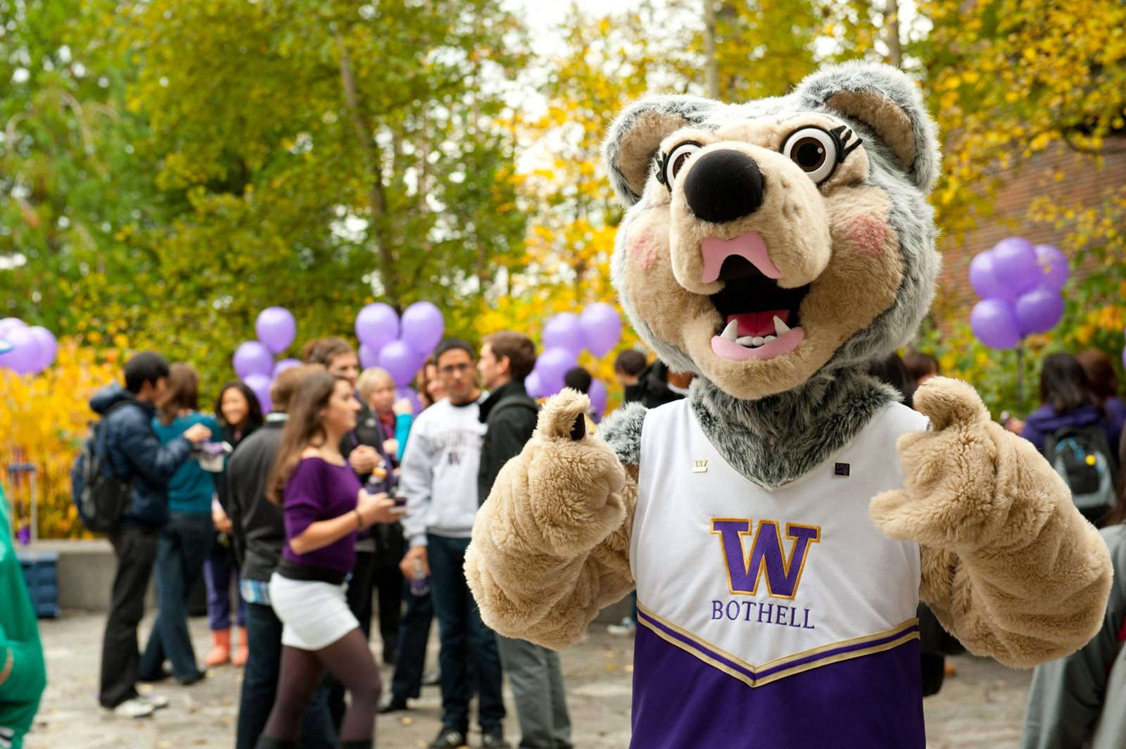 Picture of the UW husky mascot